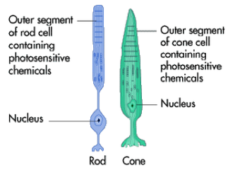 hsc biology communication Hsc biology – blueprint of life notes this is a set of hsc biology dot-point summary notes for blueprint of life hsc biology tutoring at dux college provides students with the right support to achieve a band 6 result in hsc biology.